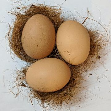 #25. 聊聊冻卵的亲身经历