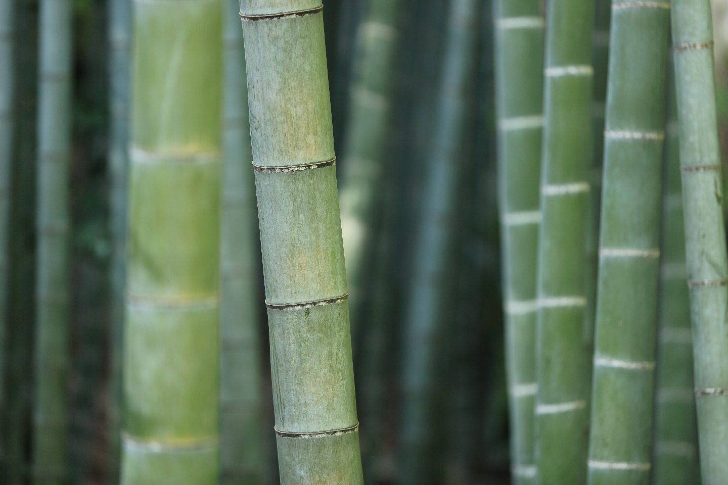 The Bamboo Theme