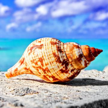 012.【海螺壳】隔离在家的日子